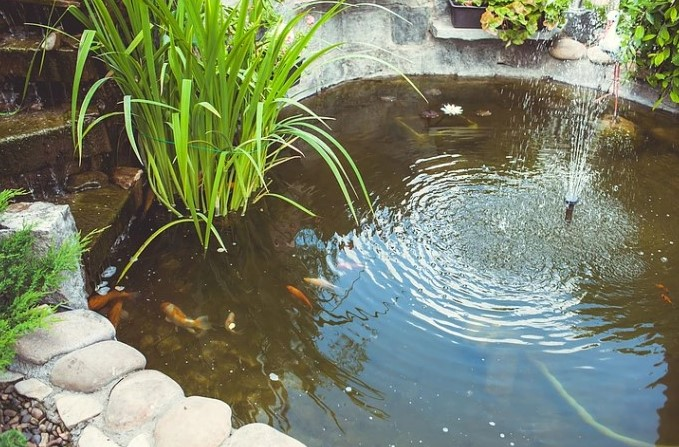 How do you Eliminate Fish-pond Algae?