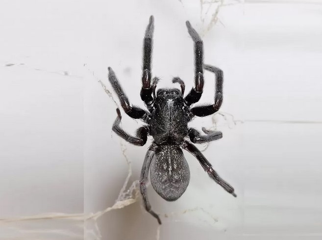 5 Things about Sydney's Spider Control Service You Must Know to Remove Dangerous Spiders Safely