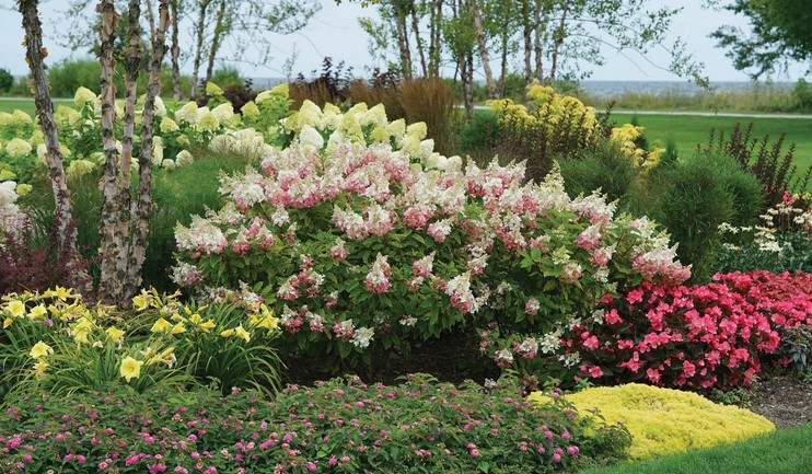 Hydrangea Kinds — Excellent Types for the House Scenery
